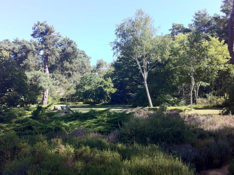 Un arboretum
