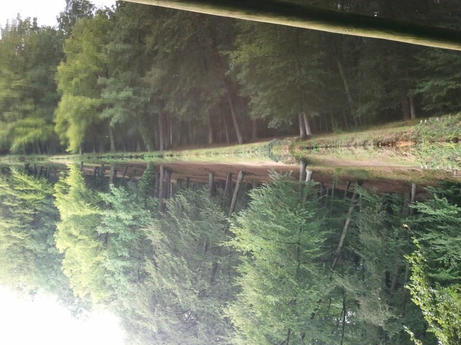 Forêts et rivière