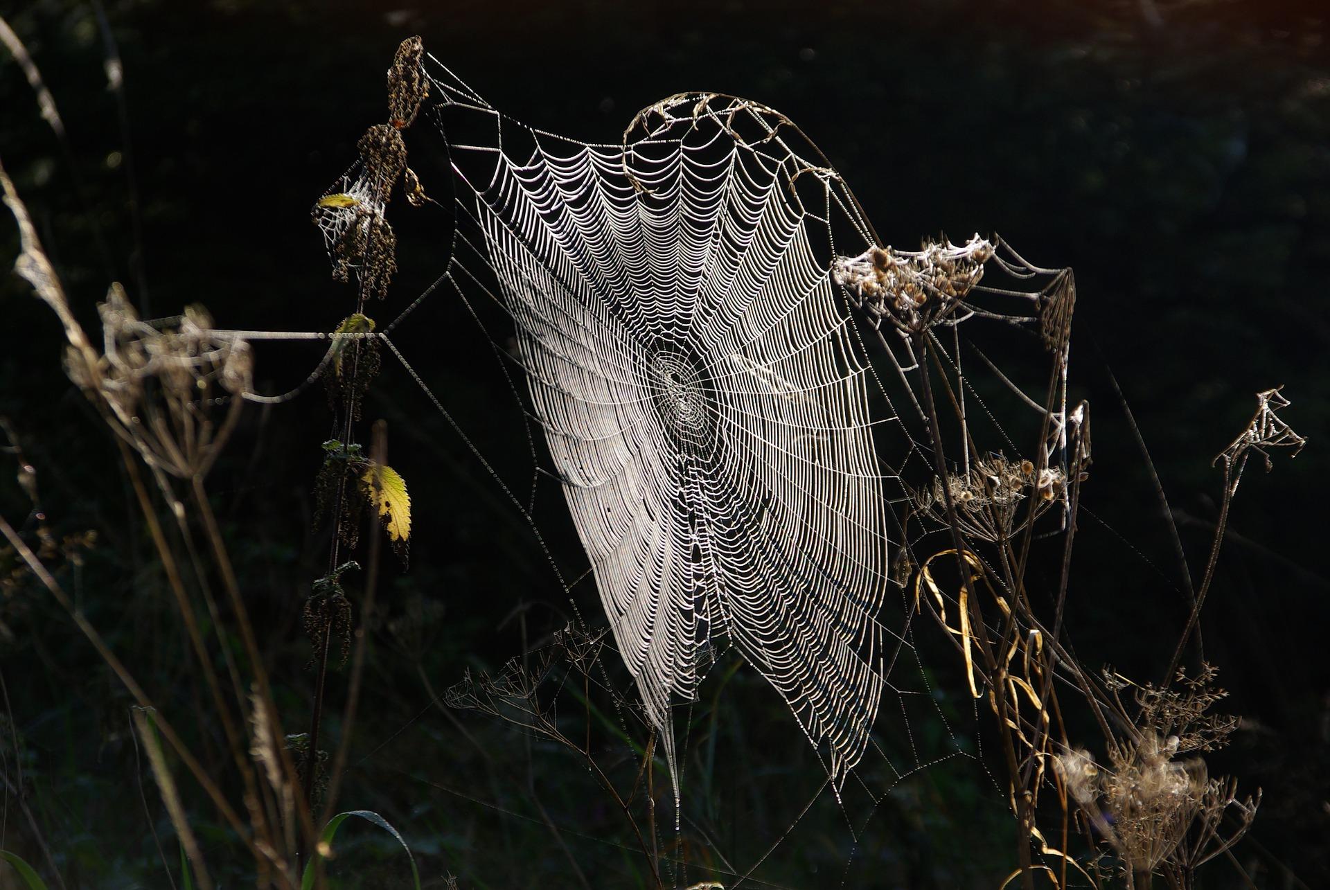 Toile arachnide dans La Passion de l'Arachnee