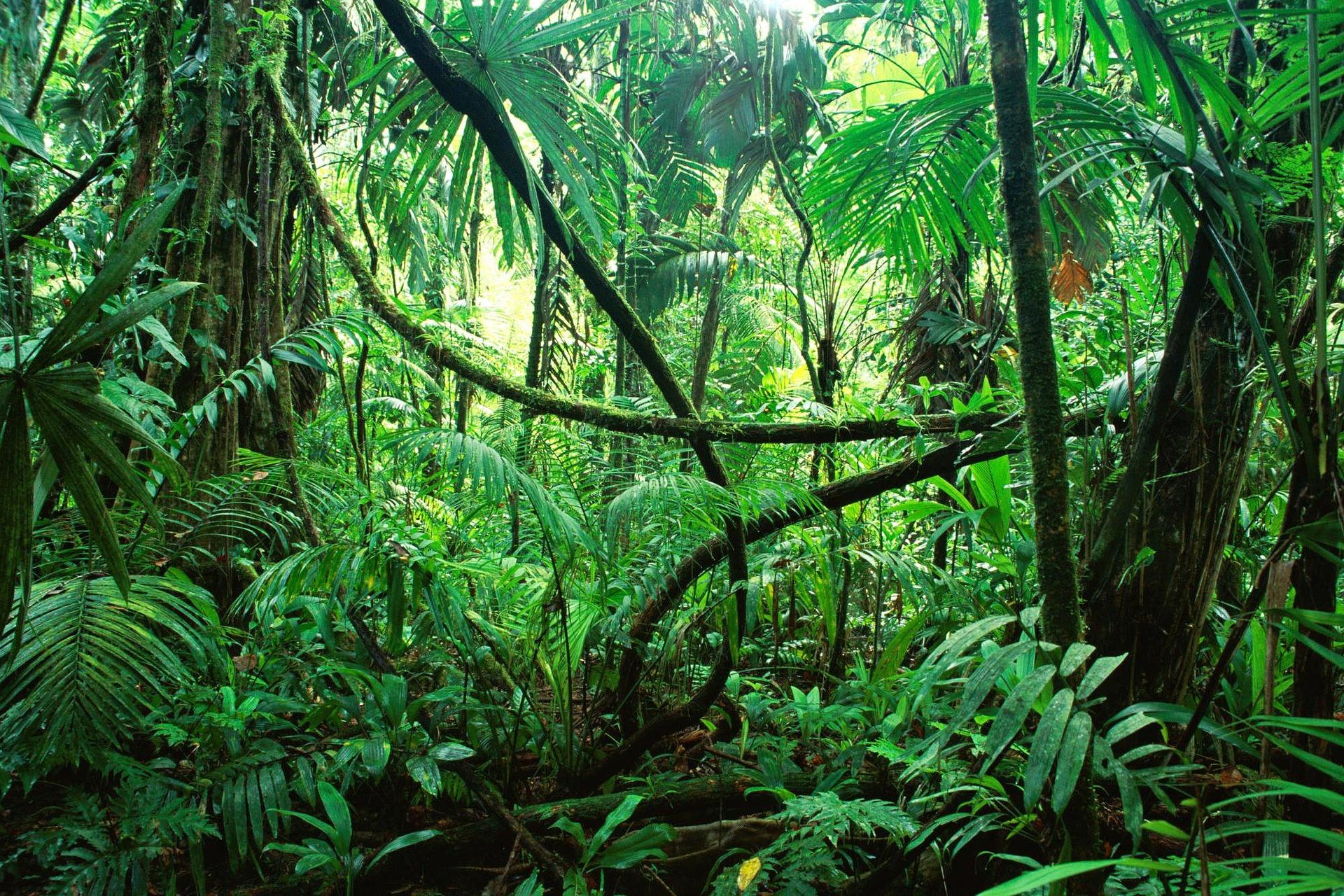 La jungle de Thanäos - Pixabay